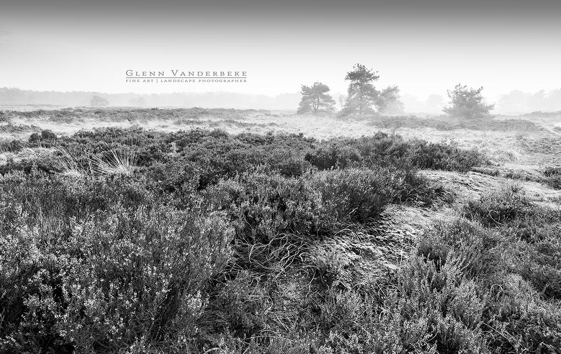 Glenn Vanderbeke, landschapsfotograaf, landscape photographer belgium, belgian landscape photographer, belgian fine art photographer, West-Vlaamse landschapsfotograaf, Monocrhome Photography Awards, MonoAwards, fine art photography, kalmthoutse heide