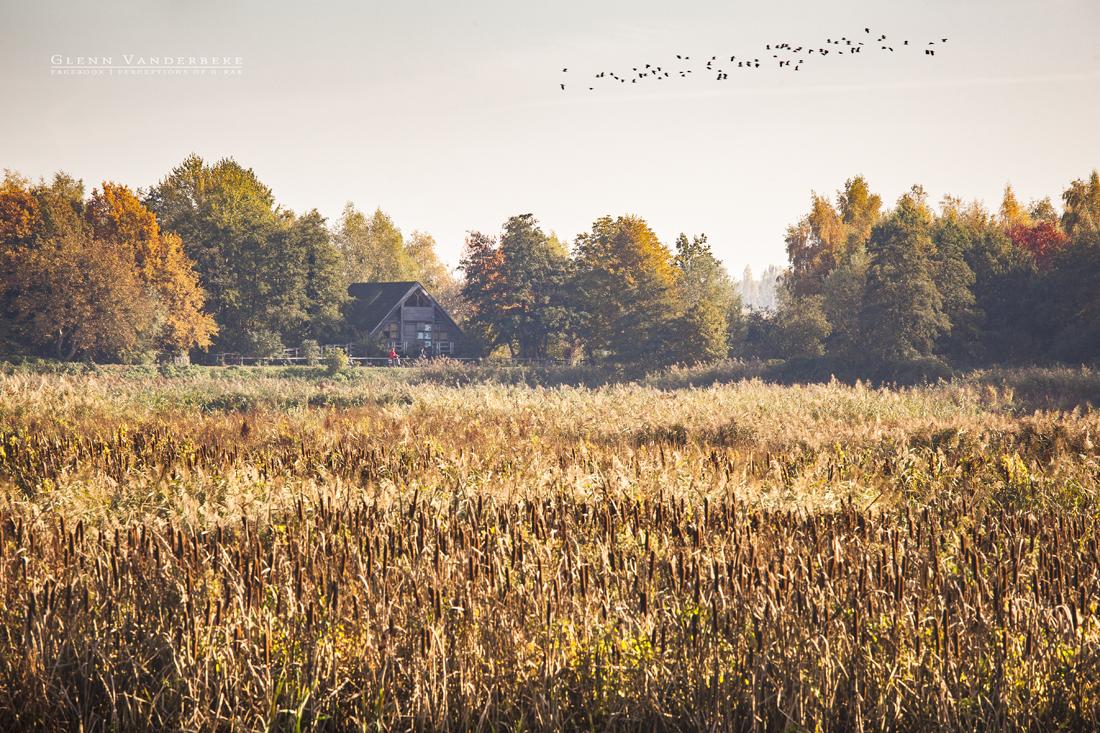 glenn vanderbeke, landschapsfotografie, landschapsfotograaf, fotografie molsbroek, foto uitstap, foto dagtrip, fotografische dagtrip, west-vlaamse fotografen, west-vlaamse fotograaf, lokeren, molsbroek, natuurreservaat, wandeling molsbroek, wandelen in molsbroek, vogelparadijs