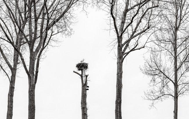 Tokyo International Foto Awards, TIFA, honorable mention, Glenn Vanderbeke, Glenn Vanderbeke landschapsfotograaf, landschapsfotografie west-vlaanderen