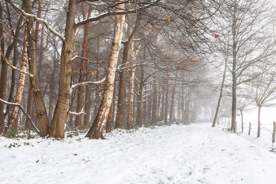 glenn vanderbeke, landschapsfotografie, landschapsfotograaf, foto uitstap, foto dagtrip, fotografische dagtrip, west-vlaamse fotografen, west-vlaamse fotograaf, Foto uitstap, Vlaanderen, West-Vlaanderen, Torhout, Provinciedomein d'Aertrycke